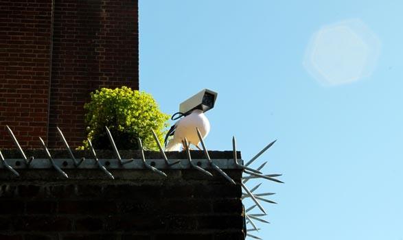 camera-bird